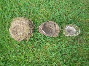 Nester, die wir gefunden haben